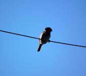 Céu limpo e Pássaro