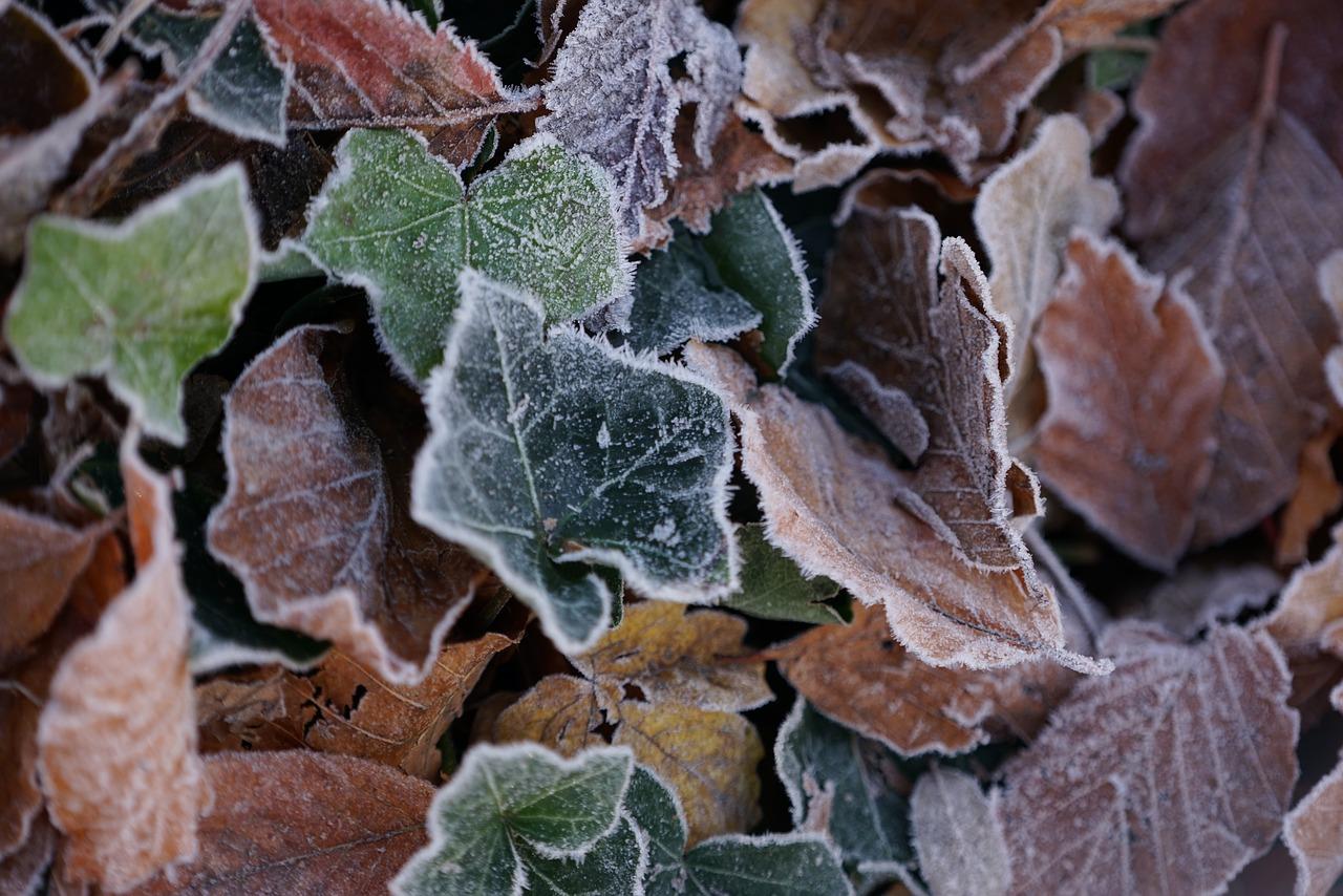 Folhas com geada