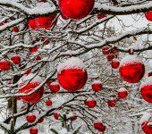 Natal com gelo