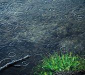chuva e ervas