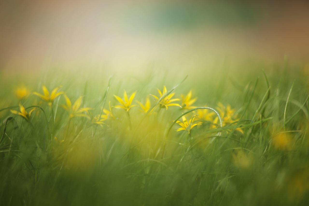flores e erva