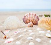areia e conchas