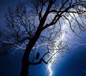 árvore com raio