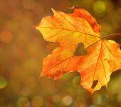 coração de outono