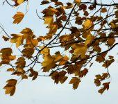 folhas e vento